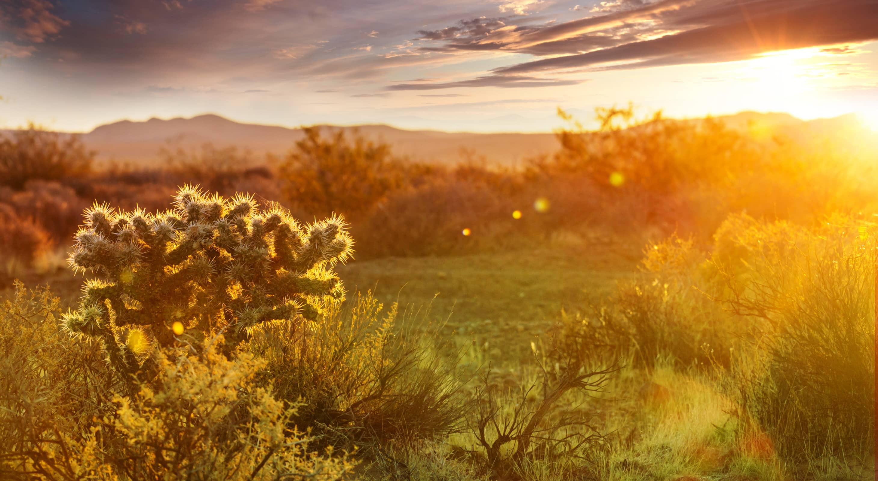 Cactus Sunset - Tucson Arizona activities