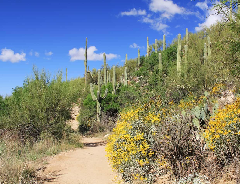 Hiking trail at Sabino Canyon Arizona